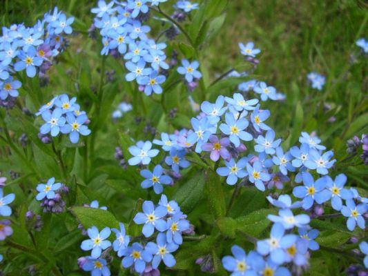 fleur5.jpg